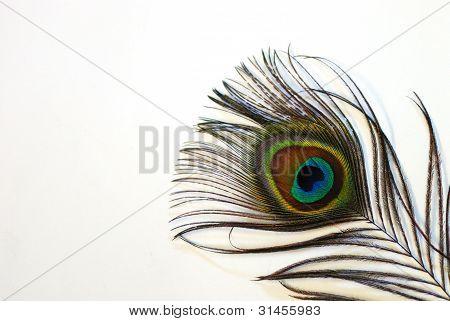 visión grande de plumas de pavo real