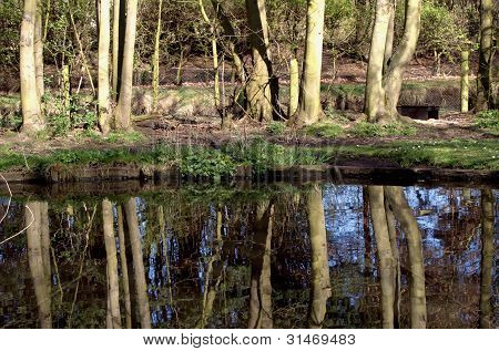 forest trees reflection on still water