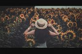 Field Of Sunflowers In Sunlight. Girl, Rear View, On The Field Of Sunflowers. Happy Young Woman Walk poster