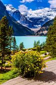 Glacial Lake Louise in Canadian Rockies. The lake embankment with green lawns and flower beds. The l poster