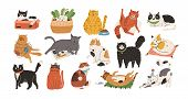 Bundle Of Adorable Cats Sleeping, Stretching Itself, Playing With Ball Of Yarn, Hiding In Box Or Bas poster