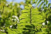 stock photo of faber  - Bright green leaves taken at Mount Faber park in Singapore - JPG