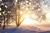 Winter Christmas Background. Illuminated Snowflakes Bokeh. Winter Nature Landscape With Bright Sun.  poster