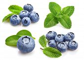 Set Berry Blueberry with Leaf mint. Fruity Still Life for Packing. Isolated on White Background, blu poster