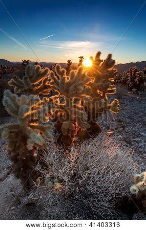 Good Morning Cacti