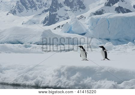 Two Adelie Penguins On The Ice Among Icebergs.