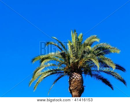 Palm Tree On A Turquoise Background