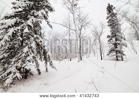 Snowy backcountry winter trail in Yukon T Canada