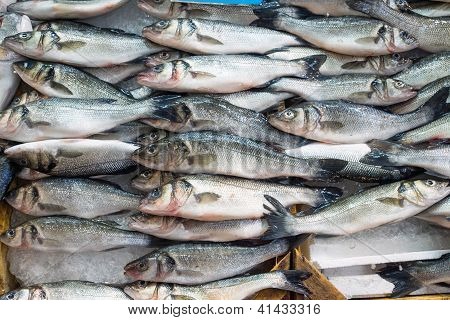 Fresh fish offer for sale