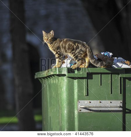 cat on the container