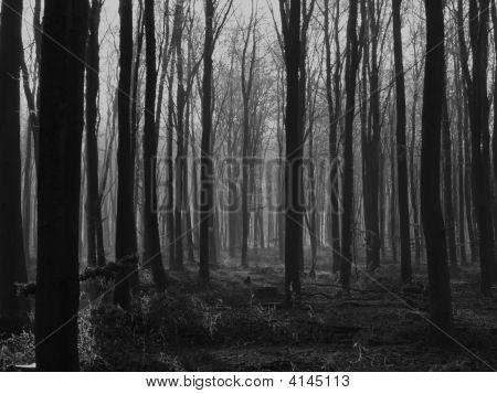 Wild Wood, Uk