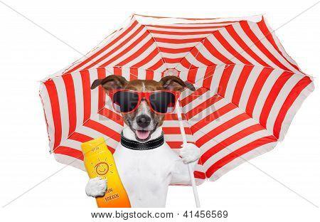 perro de verano