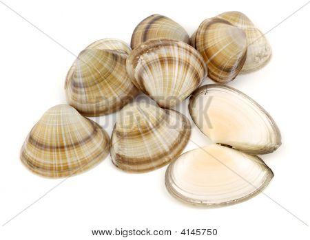 Shells Stack