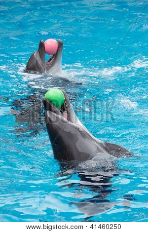 Dolphins playing in pool