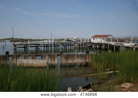 Softshell Crab Dock