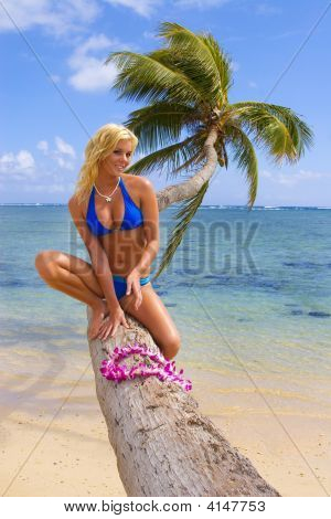 A Beautiful Blond Girl On A Palm Tree