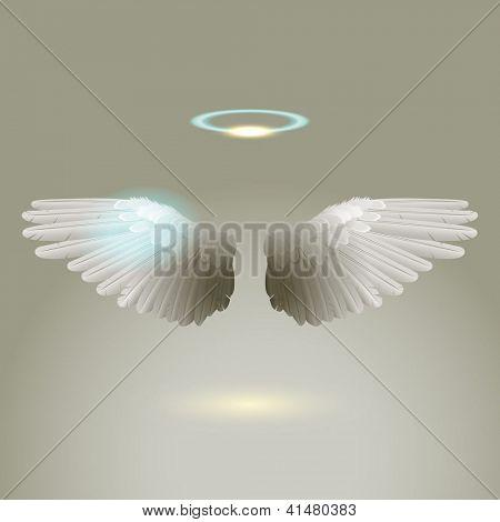 Angel wings, eps10 vector
