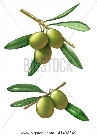 Some olive branches. Digital illustration with clipping path included.