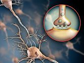 pic of neurotransmitter  - Two neurons connecting by using electrochemical transmissions - JPG