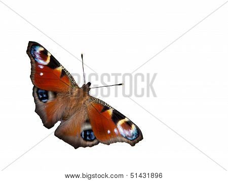 Peacock Butterfly (Inachis Io) Isolated, Sweden