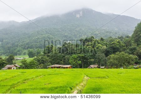 Green Field And Mountain In Doi Inthanon, Maeglangluang Karen Villages