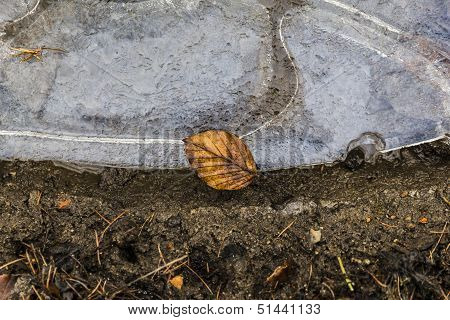 Single Leaf Laying On A  Ice Floe