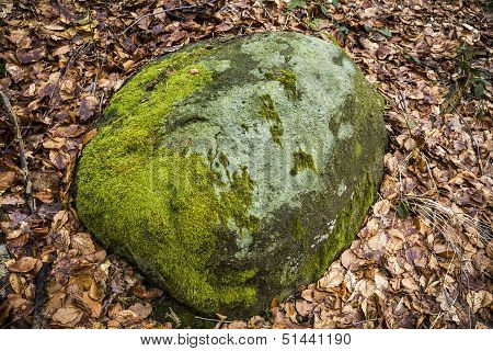 Closeup Of A Rock With Dosh And Autumn Leaves Around