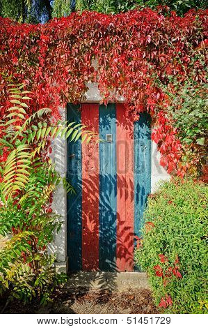 Colorful Rustic Door Covered By Lianas