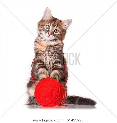 Cute kitten playing red clew of thread, isolated on white background