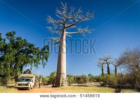 Bush Taxi And Baobab