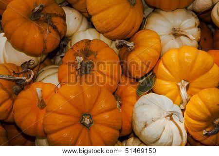 Close up of assorted mini pumpkins