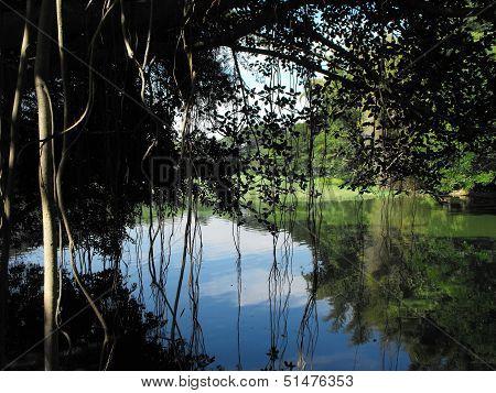 Banyan Tree over Lake