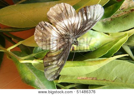 Black and White Butterfly on a Leaf