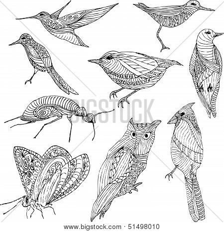Hand drawn birds and bugs