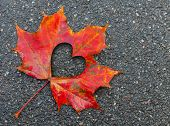 foto of fall decorations  - Fall in love photo metaphor - JPG
