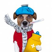 picture of hot-water-bag  - sick dog with fever and a hot water bottle - JPG