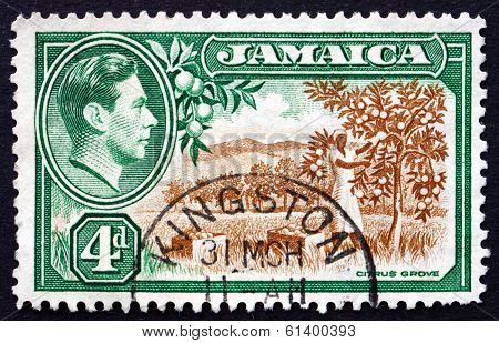 Postage Stamp Jamaica 1938 Citrus Grove