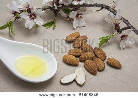 Almond Oil In A Bucket Together Fresh Flowers Of Almond