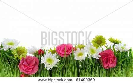 green grass  frame with flower on white background