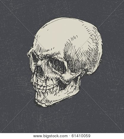 Skull. Hand drawn. Vector eps8