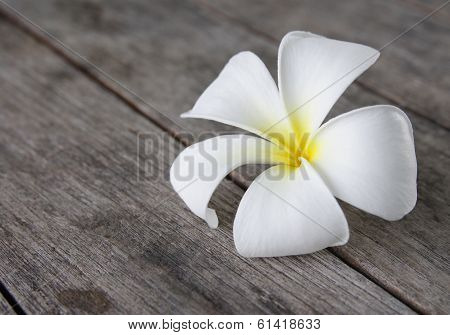 Tropical Flowers Frangipani (plumeria) On Wood
