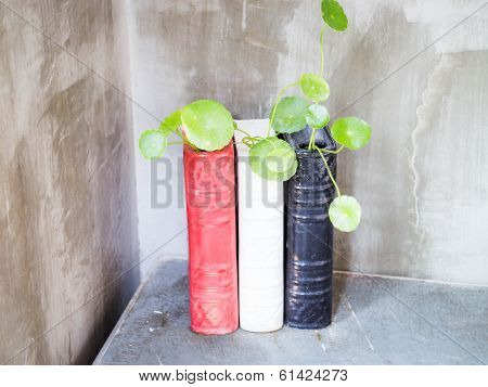 Green Plant In Ceramic Water Pot