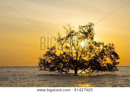 Tree In Sea