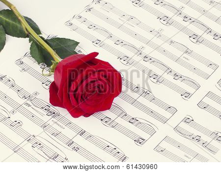 Red rose on a paper with notes
