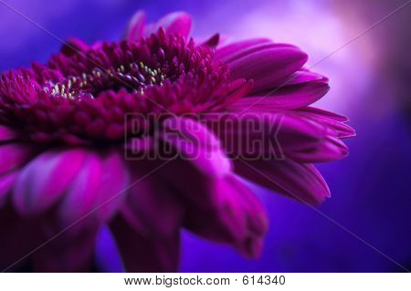 Purple Flower Composition