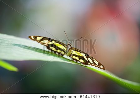 An image of a nice butterfly - Papilionidae