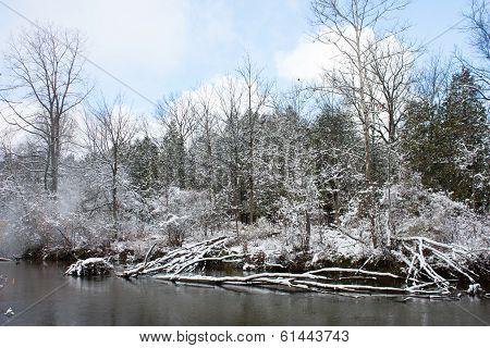 Frosty Winter Scene Horizontal