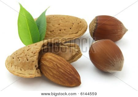 Filbert And Almond