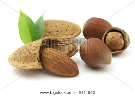 Almonds With Filbert