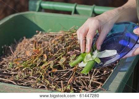 Sacking Of Organic Waste Into A Green Bins